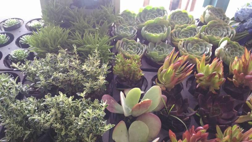 cacti #gerifiedph