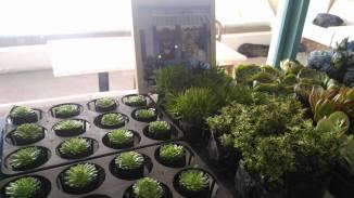 vertical garden #gerifiedph