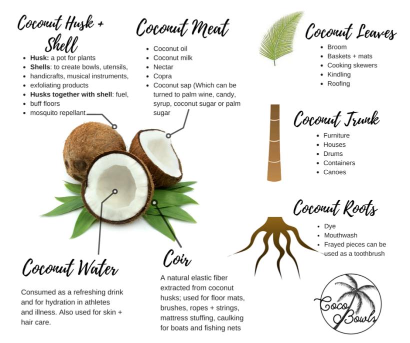 coconut #gerilenmbf.png